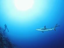 Shark In Bahamas
