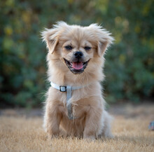 Portrait Of Dog Sticking Out Tongue On Field