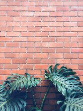 Close-up Of Potted Plant Against Brick Wall