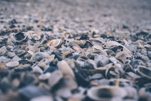 Beach Covered In Shells