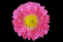 Part Of A Beautiful Pink Flower On A Black Background