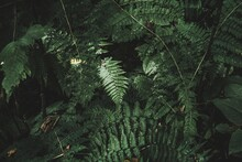 High Angle View Of Fern Amidst Trees In Forest