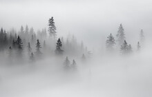 Panoramic View Of Trees In Forest Against Sky