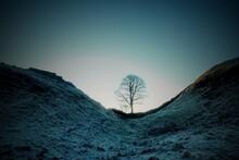 Dawn At Sycamore Gap Hadrian's Wall