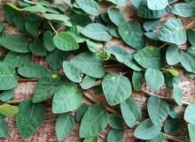 Full Frame Shot Of Leaves On Wooden Wall