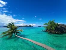 Coconut Tree And Crystal Green Sea