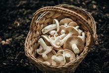 A Basket Of Edible Mushrooms.