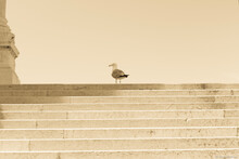 A Seagull On Some Marble Stairs In Rome