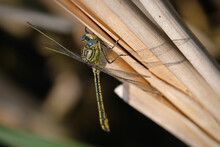 Close-up Of Damsel Fly