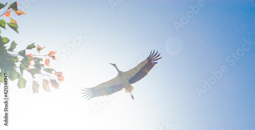 Tablou Canvas White Stork overhead