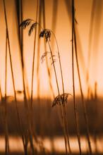 Close-up Of Stalks Against Orange Sky During Sunset