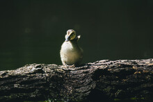Close-up Of Baby Duck Spreading Wings On Tree
