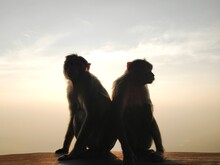 Monkeys Against Sky During Sunset