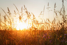 Sunset Through The Grass In The Field