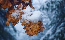 Close-up Of Frozen Covered With Snow