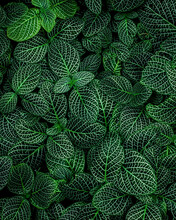 Closeup Nature View Of Green Leaves Background