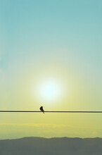 Silhouette Of Swallow Standning On A Wire At The Morning September Sun