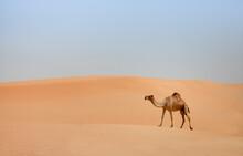 Camel Standing In Desert Against Clear Sky