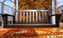 Autumn Leaves Fallen On Footpath