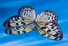 Paper Kite Butterfly In Reflection In Blue Water