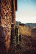 Cactus In A Front Of A Stone Wall