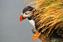 The Far-west Of Europe In Iceland With Only Birds Ans Wind