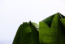 Close-up Of Green Leaves On Plant Against Sky