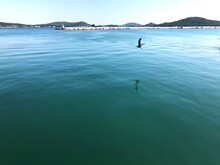 View Of Birds Swimming In Sea
