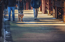 Low Section Of People Walking Their Dog In Across A Bridge In The City