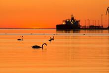 Birds In Sea Against Orange Sky