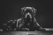 Strong, The Rottweilers In Bw