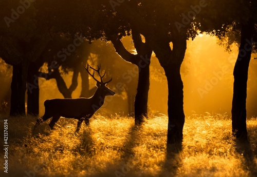 Silhouette Of Deer On Field During Sunset