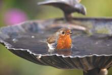 Close-up Of Bird Bathing
