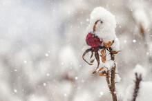 Close-up Of Snow Covered Fruit Tree During Winter