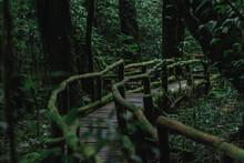 Rainforest Wood Path - Doi Inthanon, Chiang Mai, Thailand