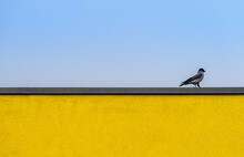 Bird Perching On Yellow Wall Against Clear Sky