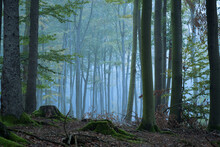 Hazy Forest In Autumn