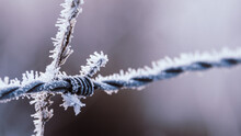Iced Wire Fence