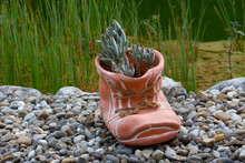 Close-up Of Big Shoe With A Plant
