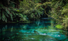 Scenic View Of Fresh Water Blue Spring  In Forest