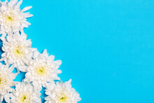 White Flowers Over Blue Background With Copy Space. Flat Lay, Top View.