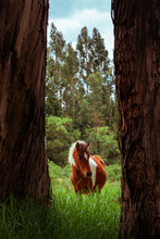 Retrato De Un Hermoso Caballo Dentro De Un Paisaje De Imponentes árboles En Un Día Soleado De Invierno
