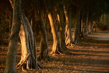 Trees In Forest Sun Setting
