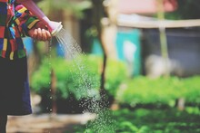 Midsection Of Woman Watering Plants At Yard