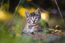 Portrait Of Tabby Cat In A Field