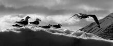 Birds On Snow Covered Field Against Sky