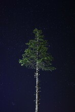 The Lone Tree At Night