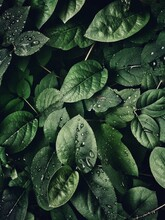 Full Frame Shot Of Wet Leaves With Droplets