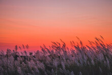 Silhouette Plants On Land Against Romantic Sky At Sunset