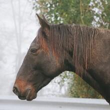 The Brown Horse Portrait